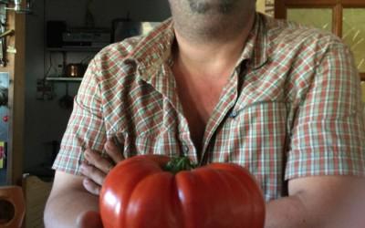 Une tomate de 1,185 kg !